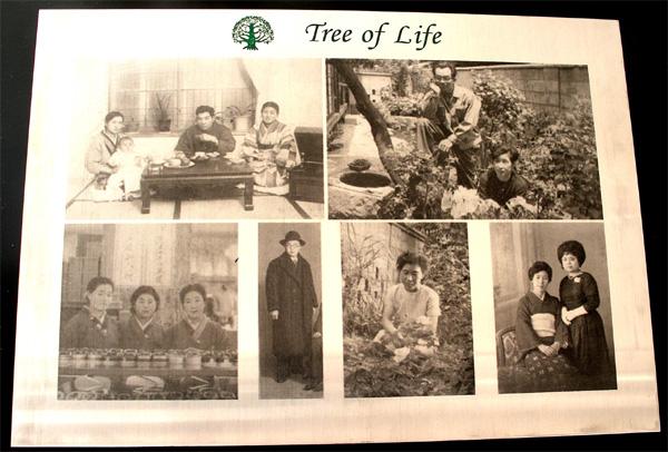 tree of life upload.jpg