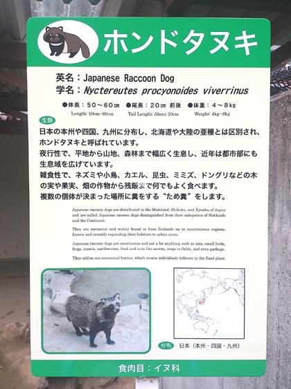動物園ホンドタヌキenglish420.jpg